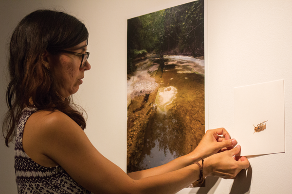 David Sanchez/ The Et Cetera Gallery director Iris Bechtol installs art pieces for the In Good Company show on campus.