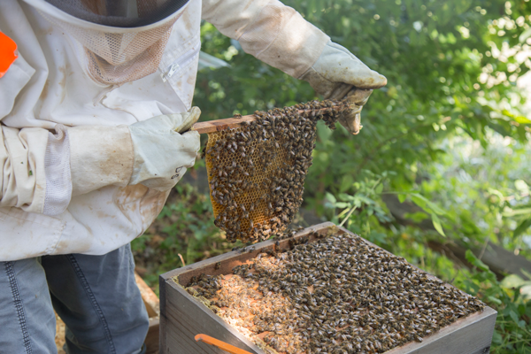 The Bee's Knees: Biology lab coordinator houses thousands of bees
