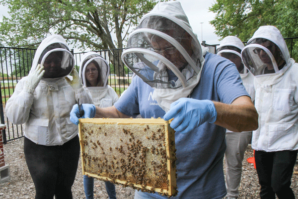One of the colonies of bees at the bee farm at the University of Texas in Dallas. Eastfield is planning to get its own beehive this year. Photo by Anthony Lazon/The Et Cetera